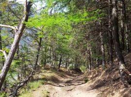 Fête du Sentier du Troupeau